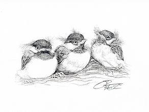 84 baby chickadees.jpg