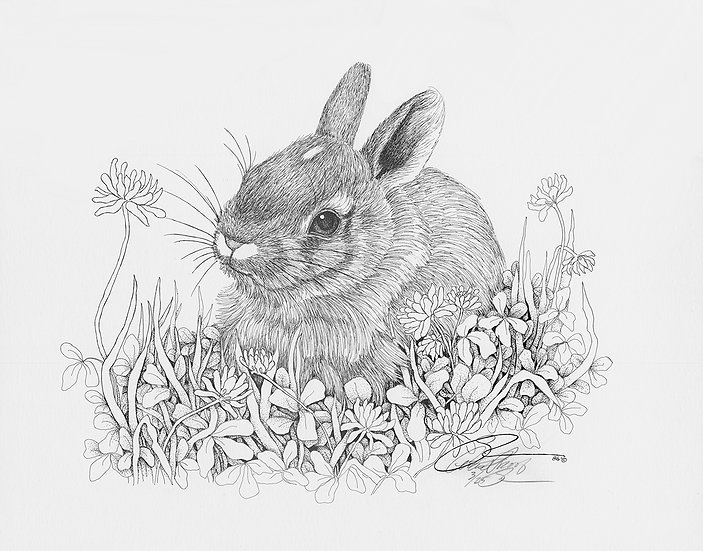 "1986 Baby Rabbit in Clover  15""x 18"""