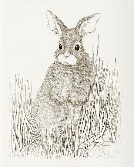 "1982 Rabbit in Grass  15""x 18"""