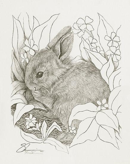 "1978 Bunny 15""x 18"" Archive Print"