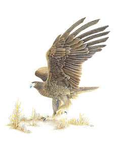 new Eagle-Dancing-.jpg