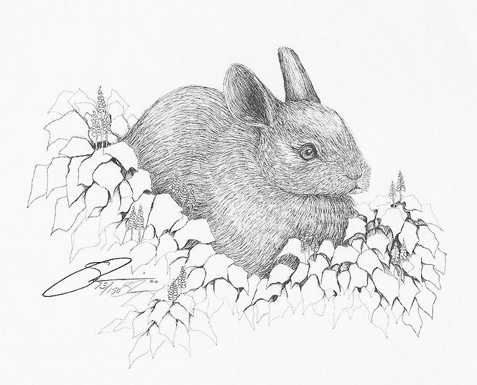 "1981 Teen Bunny 11""x 14"" Archive Print"