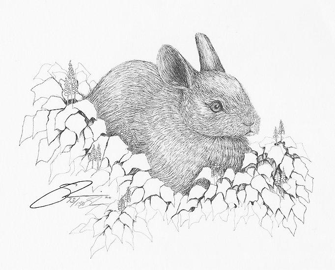 "1981 Teen Bunny 11""x 14"" Archive Print"