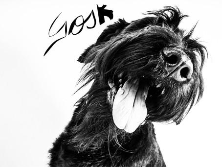 ¡Bienvedidx #GOSKLOVER!