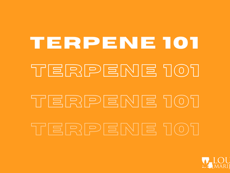 Terpene 101: What Are They, What Do They Do & Why We Need Them