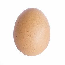 Egg isolated on the white background.jpg