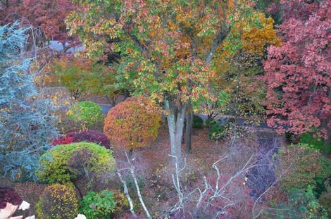 秋葉調色盤