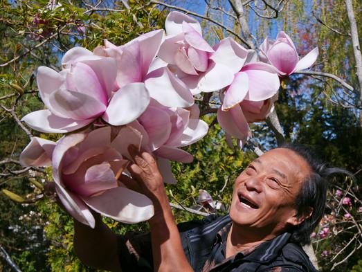 爾平和他的大木蘭花