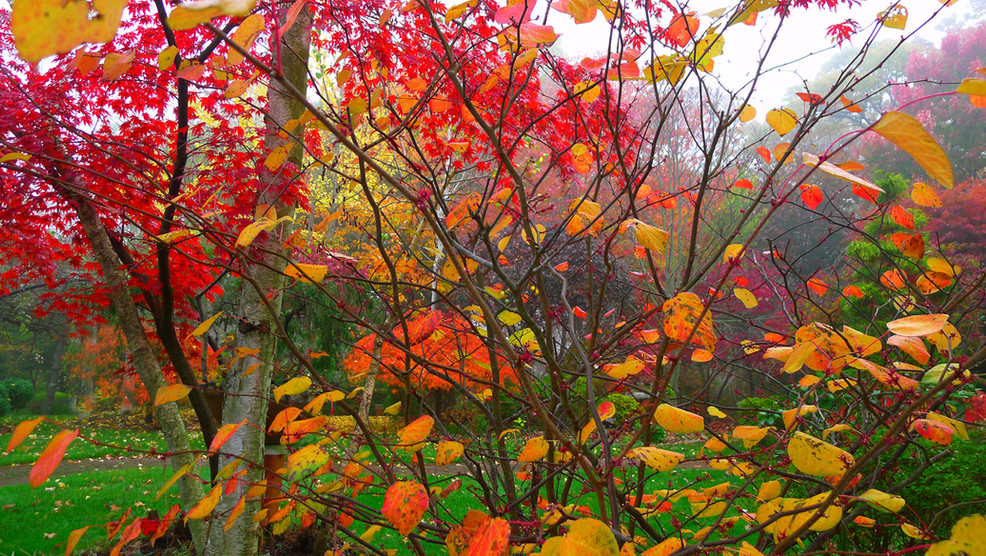 秋的濃妝豔抹