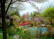 紅橋春景 2007