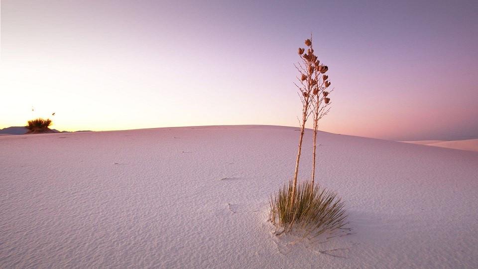 世界最大の石膏砂漠、ホワイトサンズ@いいかべ珪藻土ブログ