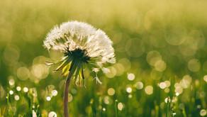 「いいかべ珪藻土」ホームページを開設