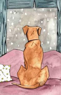 Dog watching the snowfall