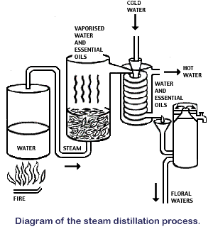 Diagram of Steam Distillation process