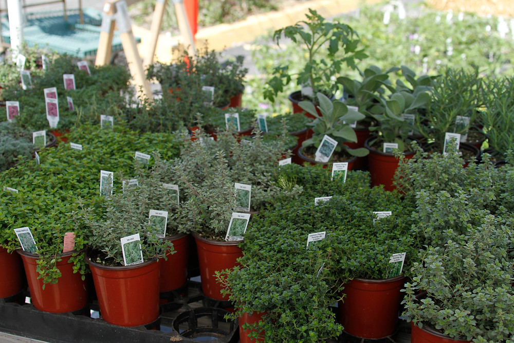 Herbs, tomatoes, and vegetables are among the choices for shoppers at the Spring Planting Jubilee & Tomato Sale.