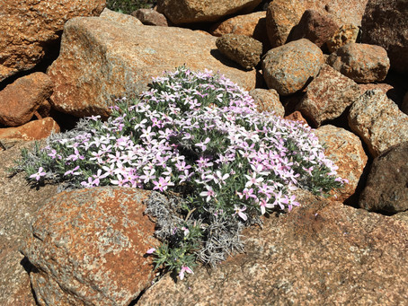 MY LIFE WITH PLANTS: Climbing Cuyamaca:  Part 1