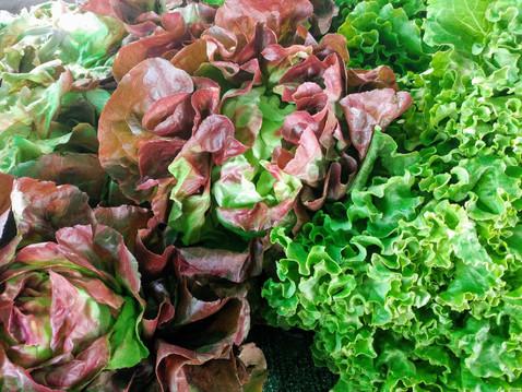 GROW WITH ABUNDANCE: Crisp and Tender Summer Lettuce