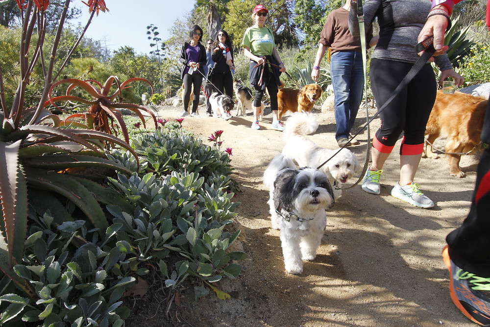 Plants, paws, and people unite for a fun day of socializing on the beautiful grounds of SDBG.