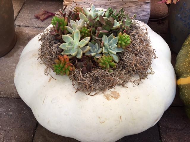 Barbara Dunn's succulent creation.