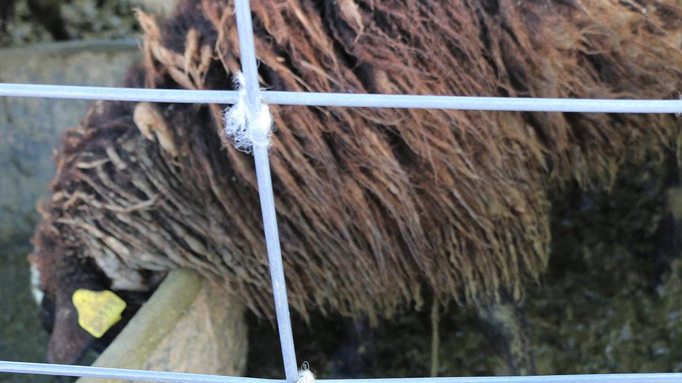 3L 20-559 QR Triplet Black ewe. Single by Night Rider QR