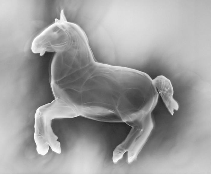 63_streicher-photo-horse-5.jpg