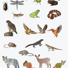 Animals for science applications