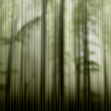 MISTIC-FOREST.png