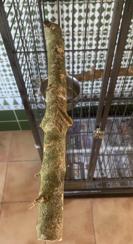 Percha madera Natural 20cm