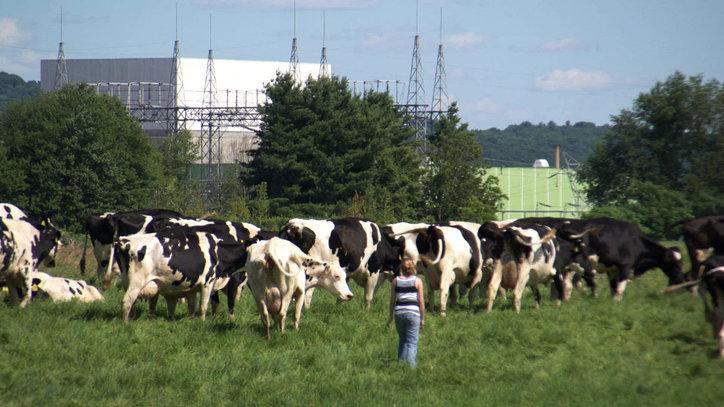 10-POWER_STRUGGLE-Vermont_Yankee_and_Cow