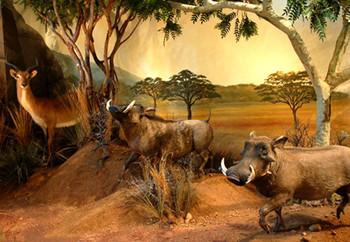 Africa-warthog-mural-museum-exhibit.jpg