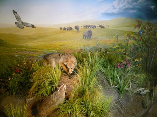 Prairie-Right.jpg