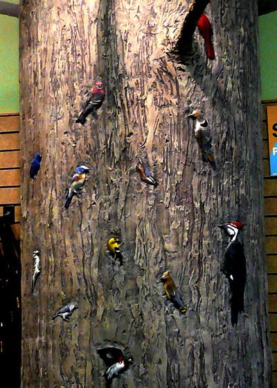 Wild-Birds-Tree-Close.jpg