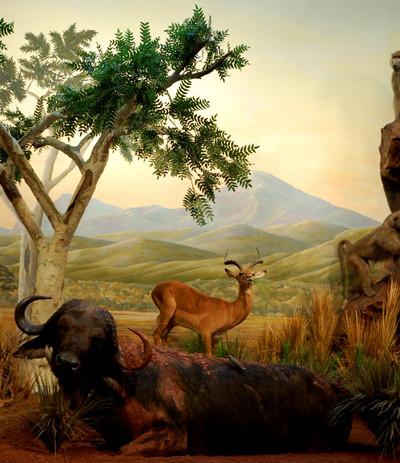 capebuffalo-mural-museum-exhibit.jpg
