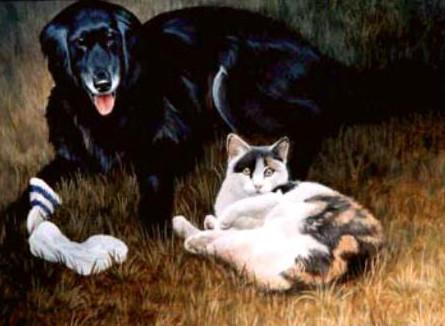 Pet-Dog-Cat.jpg