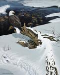 Eagle-Snowscape.jpg