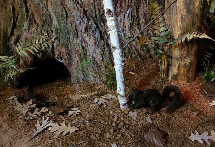 Squirrel-Bear-Den-Hole.jpg