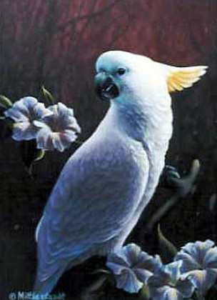 Pet-Cockatoo.jpg