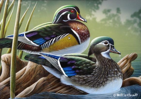 Wood-Ducks.jpg