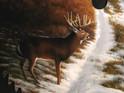 Whitetail-Deer-detail.jpg