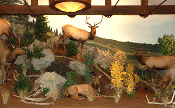 Rocky-Mt-Elk-Scene-mural-museum-exhibit.