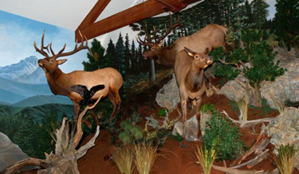 Elk-mural-museum-exhibit.jpg