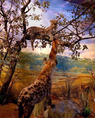leopard-mural-museum-exhibit.jpg