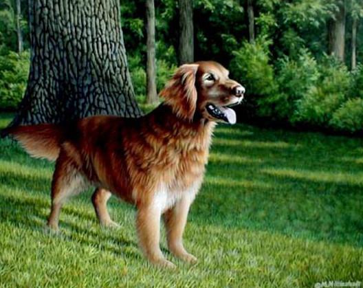 Pet-Golden-Retriever-Dog.jpg