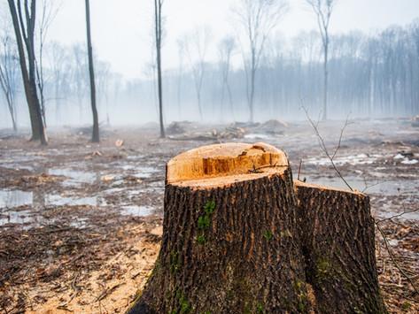 Majeski faz Indicação ao Estado por reforço no combate ao desmatamento