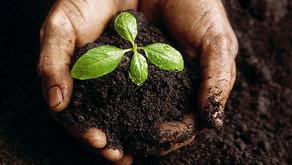 PL de Majeski propõe o fim do desmatamento no Estado