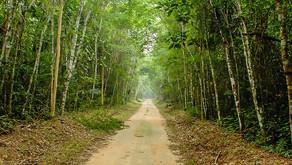Sooretama: projeto de Majeski quer proteger reserva