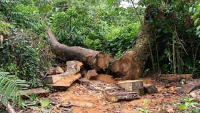Dia Mundial do Meio Ambiente: Majeski fala sobre o aumento do desmatamento no ES