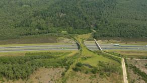 Aprovado projeto de Majeski que traz mais segurança para animais e motoristas nas rodovias e ferrovi