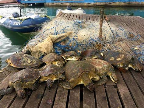 Majeski aciona MPF contra crimes ambientais na Baía de Vitória