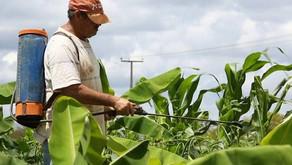 ES: Intoxicações por agrotóxicos podem ser maiores que registros oficiais